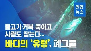 물고기·거북 죽이고 사람도 잡는 바다의 유령, 폐그물 …