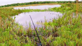 ЗДЕСЬ Я НЕ ОЖИДАЛ ПОЙМАТЬ ТАКОЕ Что это за ВОЛШЕБНОЕ МЕСТО Вот это рыбалка на спиннинг 3