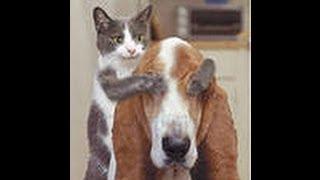 Танцы котят!)Kitten Dance
