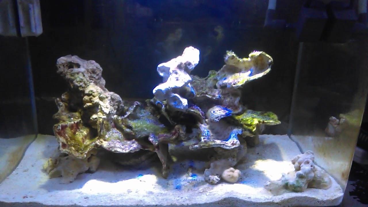 HOW TO: Aquascape a 10 gallon Nano reef tank - YouTube