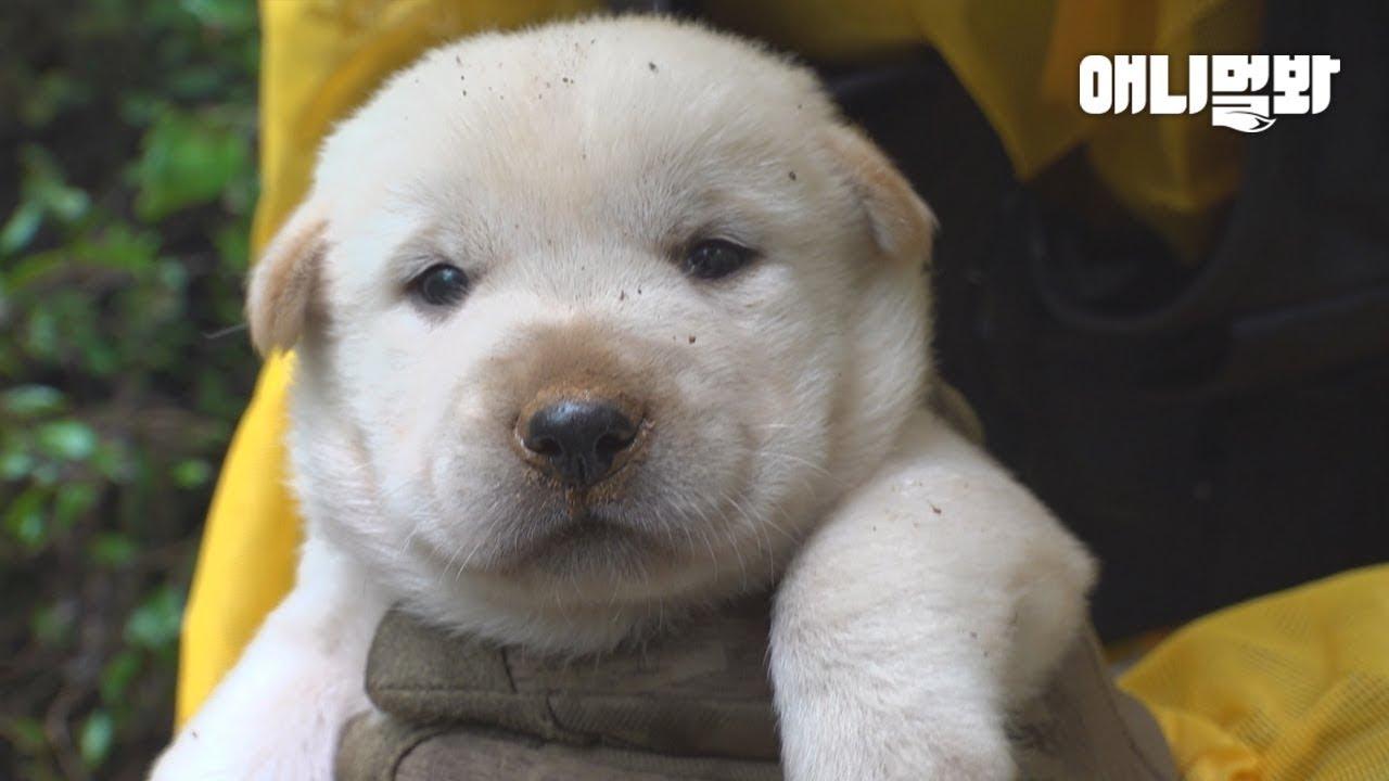 어미개의 사랑때문에 상상도 못한 곳에서 발견된 새끼 강아지ㅣShocking Spot Where Mother Dog Gave Birth When She Has A Home