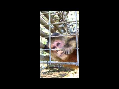 Monkey Eating And Flirting