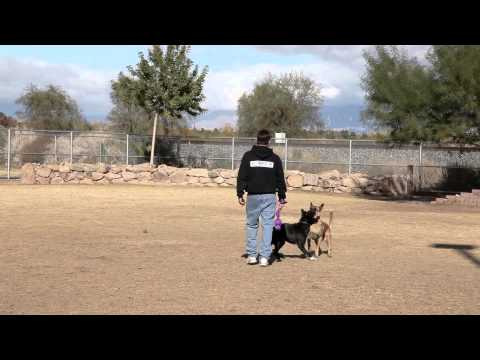 Dog Whistle Training - Dog Obedience Training at the Dog Park | SitMeansSit.com