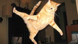 Pisici Haioase - Un Amuzant Video Pisica 2016