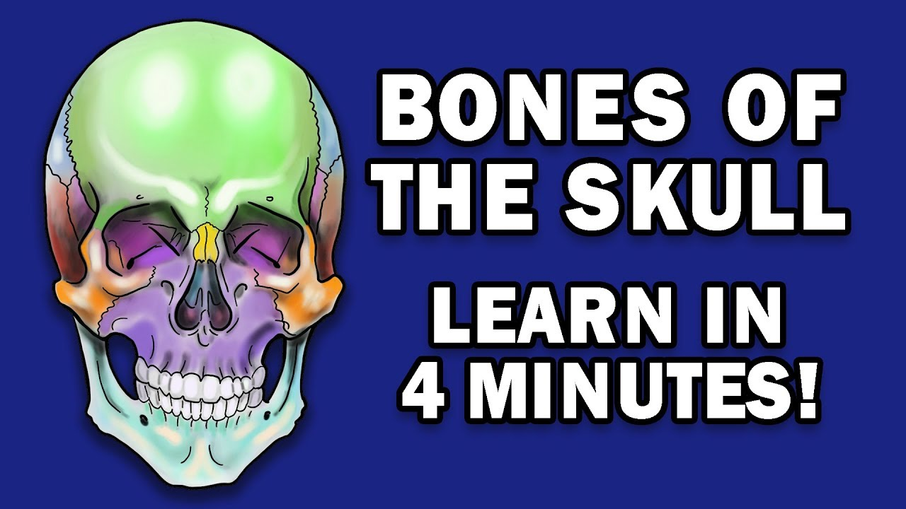 Download BONES OF THE SKULL - LEARN IN 4 MINUTES