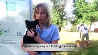 Приют в военном Донецке нуждается в помощи!