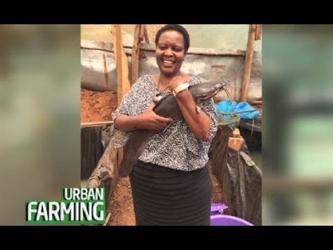 From Working In The US, Now A Thriving Fish Farmer In Thika - Part 3