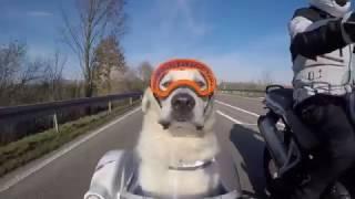 RexSpecs Hundebrille im Schwenker-Seitenwagen-Test