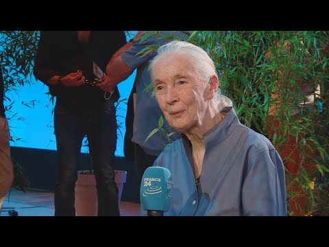 The Interview - Jane Goodall on climate change: 'Something's got to give'