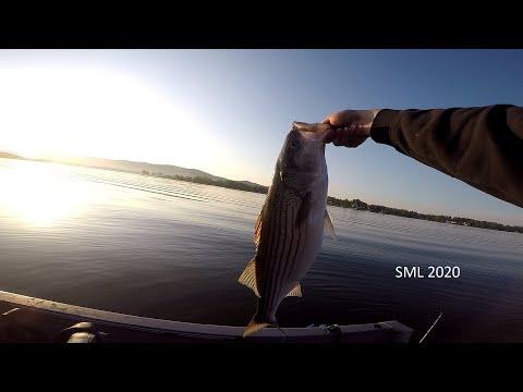 Striper Fishing At Smith Mountain Lake 2020