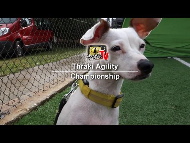 Σκύλος Κυναθλήματα Thraki Agility championship με Lila