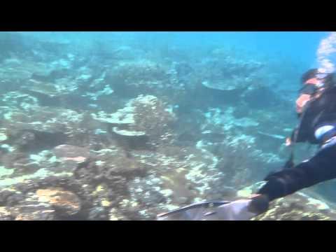 Sea Garden. Come dive @ Ora Beach Resort, Ambon, Maluku