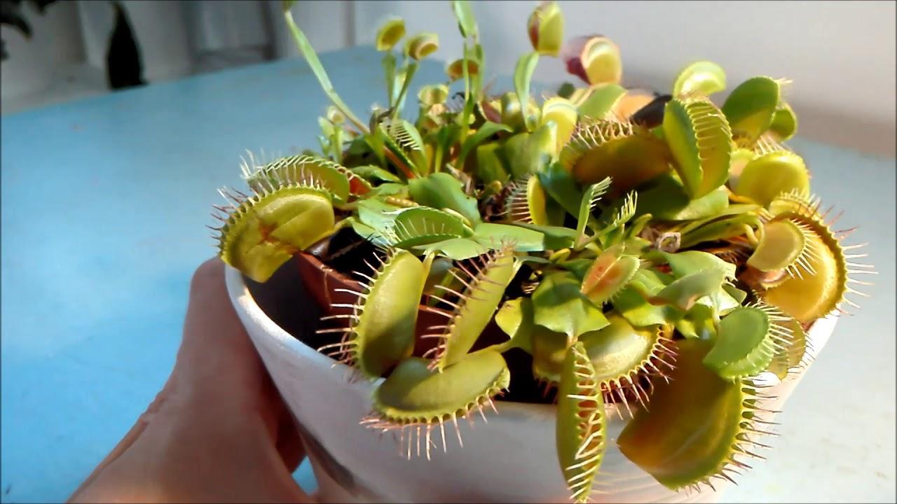 Des plantes carnivores !!! - YouTube