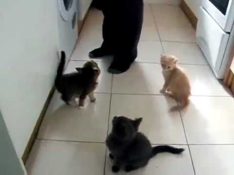 Hungry Kittens Go Crazy!!!  Hilarious!!!