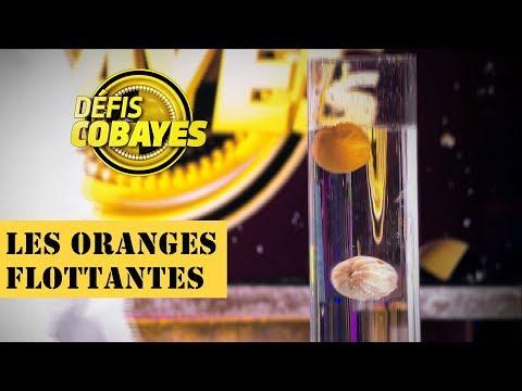 Les oranges flottantes - Défis Cobayes - France 4