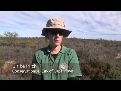 Into the Fynbos - Conserving Biodiversity in the Cape Floristic Region
