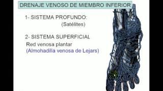 Del inferior sistema urinario vena cava