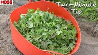 How to Grow the Best Salad Mix You've Ever Had!