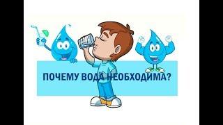 Почему вода необходима?