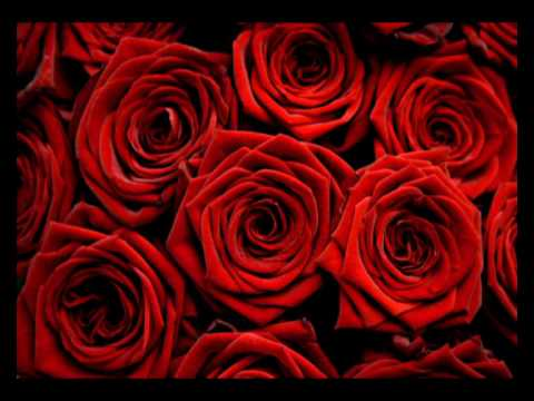 Image result for Book Of Love - I Touch Roses