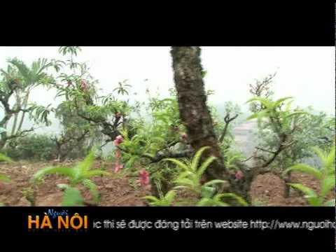 Nghệ nhân trồng mai trắng trên đất Hà Thành.mpg
