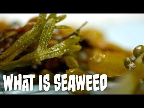 What is seaweed? | Seaweed Part 1