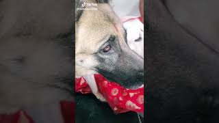Funny Dog Video On Baburao Voice Tiktok Video😂