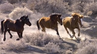 Wild Horses: No Home on the Range | Retro Report | The New York Times