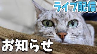 猫4匹とライブ配信!ちょっとしたお知らせ!