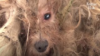 A Walking Mop Dog Looks Forward To Seeing His Dead Owner One Day | Kritter Klub