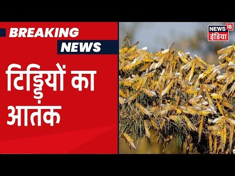 Rajasthan में टिड्डियों का कहर, प्रशासन दे रहा है किसानों को बचने का सुझाव
