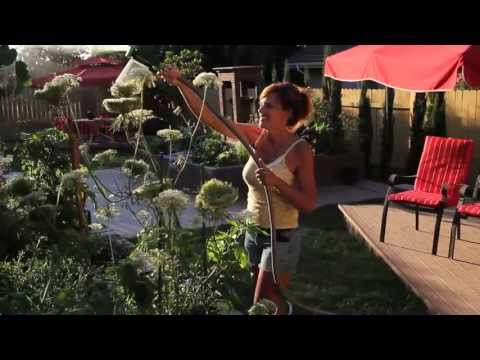 How to use Epsom Salt in the Garden  - Quick, Simple, Inexpensive