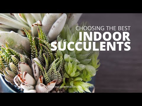 Types of Succulents to Grow Indoors | Succulents in Seconds