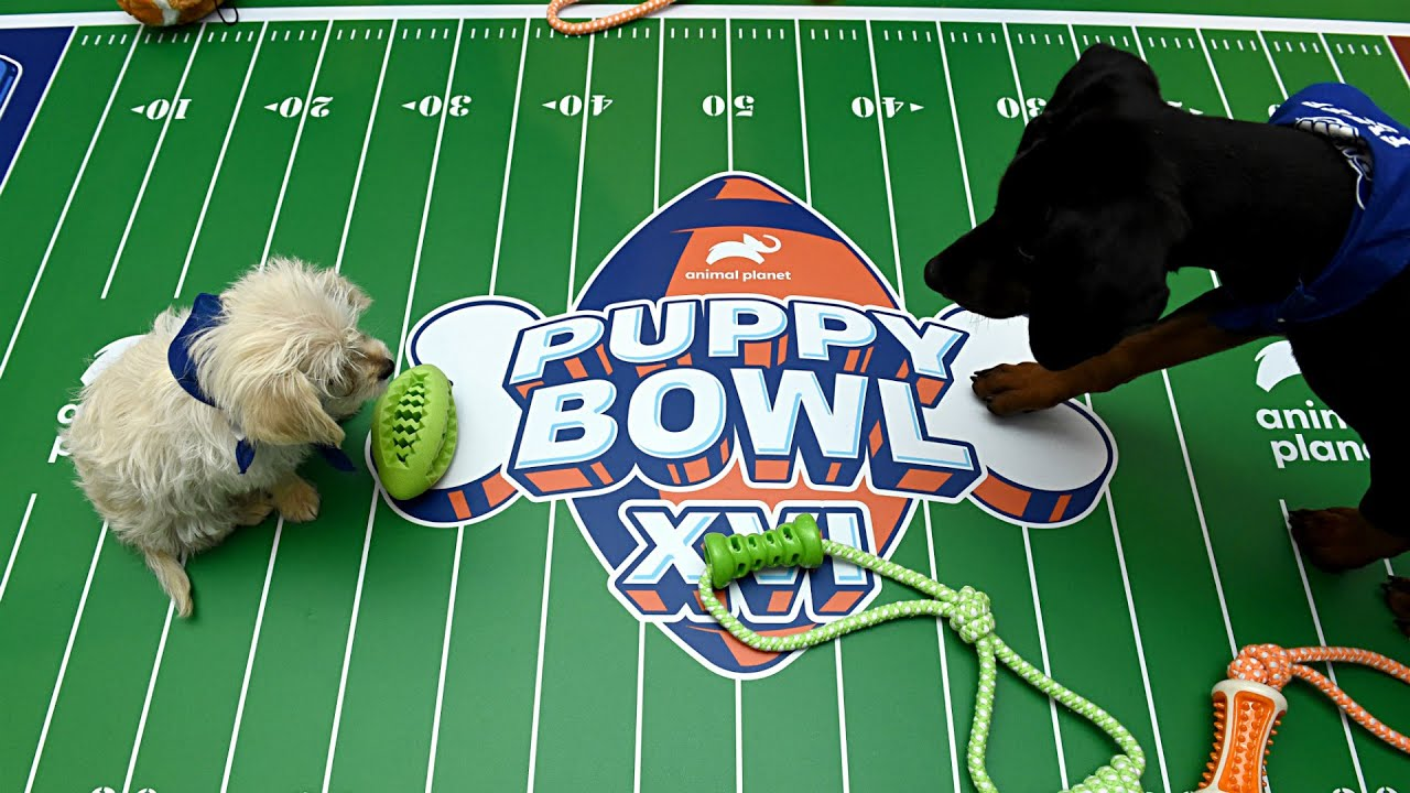 bet on the puppy bowl