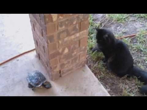 Turtle and the Cat