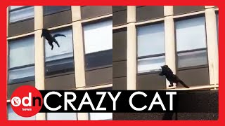 Incredible Moment Chicago Cat JUMPS From Window of Blazing FiveStorey Building