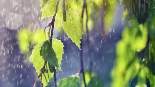 Дождь и соловей Звуки природы Музыка дождя и пение соловья