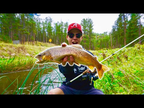 Incredible Backwoods BROWN TROUT Fishing In The BLACK HILLS!