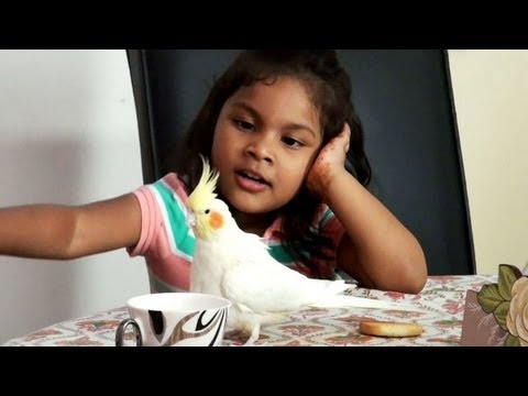 Adopting a Baby Girl Changed Their Life Forever - YouTube