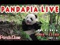 Pandapia live 20161105 2015/2016級熊貓寶寶成長直播