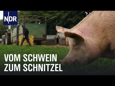Schweinefleisch: Vom Ferkel