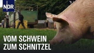 Schweinefleisch: Vom Ferkel zum Bioschnitzel  | Wie geht das? | NDR
