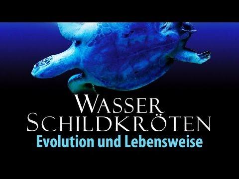 Wasserschildkröten - Evolution und Lebensweise 2011 Dokumentation   Film deutsch