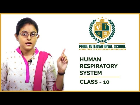 Life Processes 3 : Human Respiratory System - Class 10 Scien