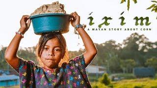 Ixim: A Mayan story about corn