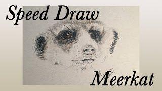 MeerKat, Speed Draw