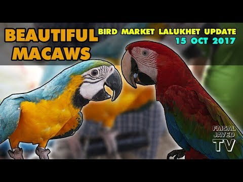 Beautiful MACAWS and other Exotic Birds for sale | Lalukhet Birds Market Karachi - Weekly Update