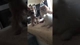 3 собаки Ольги Бузовой