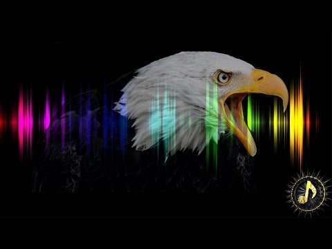 Cinematic Eagle / Hawk Cry Sound Effect