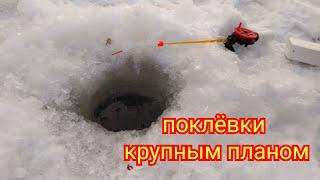 Рыбалка на реке Белая поклёвки крупным планом
